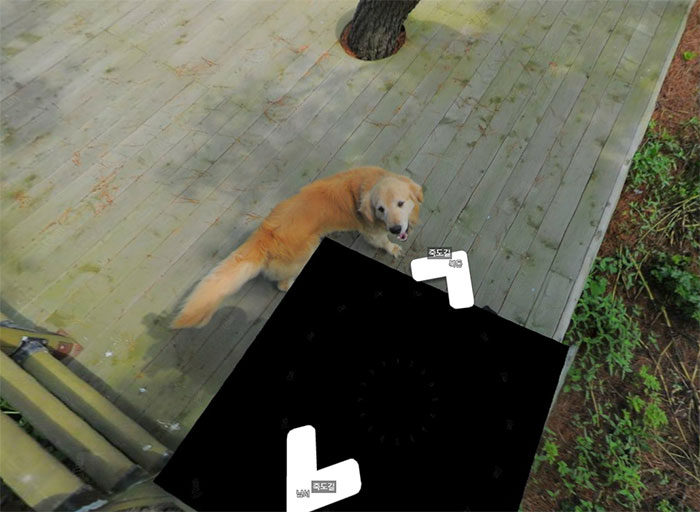 韓國小島Google拍攝街景被超萌「黃金導遊」纏上,一連串每張照片都有「他」把人萌壞! (10張)