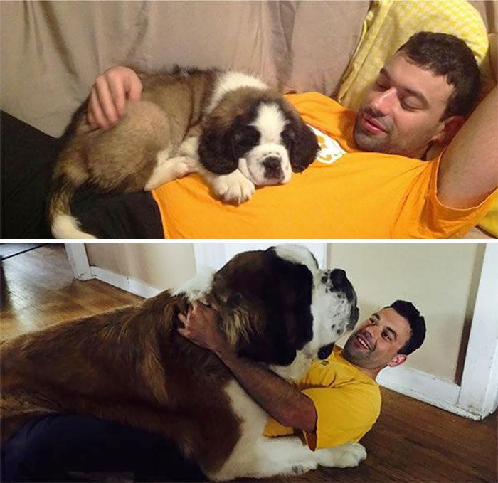 30張會讓人融化的「小狗狗長大」前後比對照!跟狗狗的時間要多珍惜!