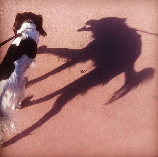 30張讓世界更精采的「影子異次元」照!#1 你家狗狗的恐怖真面目!