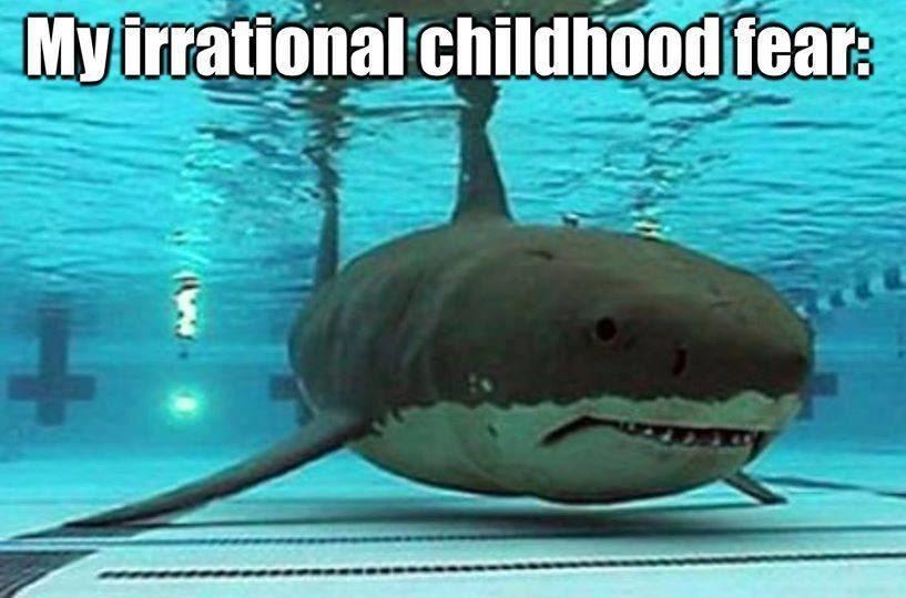 在這你可以在「海裡」看《大白鯊》電影,看到一半讓你嚇到漏尿!