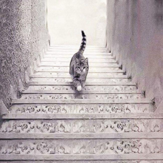 貓咪上樓還是下樓?第一眼答案透露出「你的真實性格」超神準!