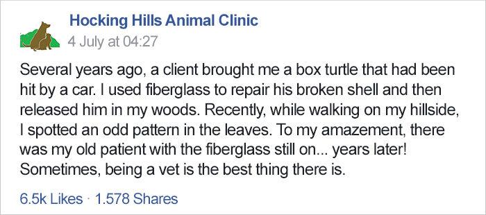 獸醫在多年前用玻璃纖維「重製受傷烏龜的殼」,幾年後他們又巧遇了...