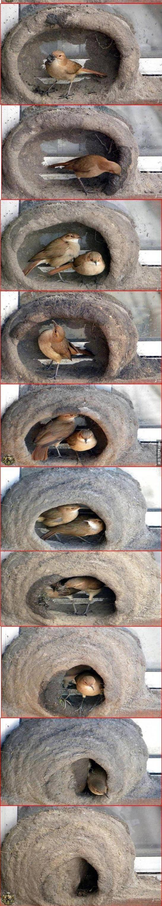 小鳥本來就會做這樣的事情,但是實際上看到還是很神奇。