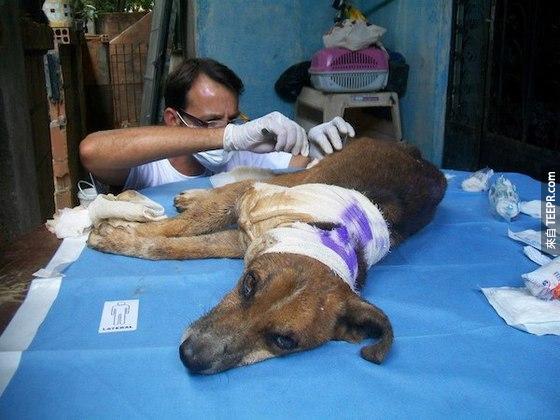 心臟不夠強的人不要看!這隻狗狗當時被尋獲的時候真的好可憐!愛狗人士必須宣導...