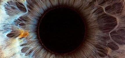 你一定以為你知道人的眼睛長什麼樣子。但是當你近看的話,你會很驚訝!