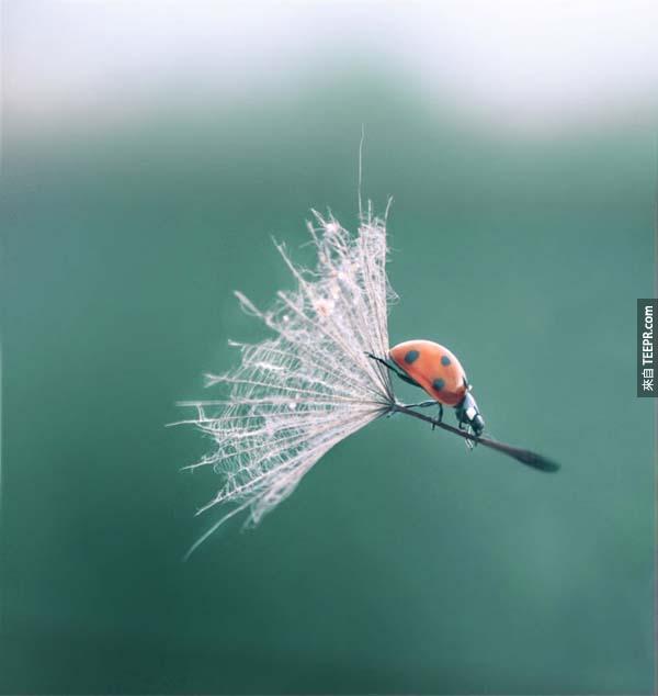 23.) 小瓢蟲巫婆。