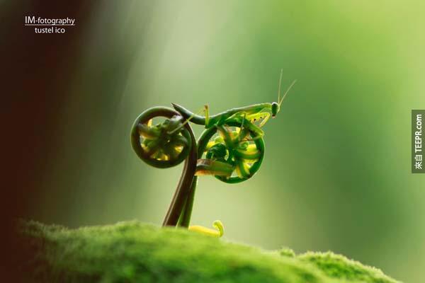 31.) 蟲自行車。