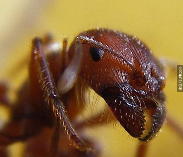 16. 蚂蚁 – 这世界上有太多种的蚂蚁了。全世界的蚂蚁加起来一年至少谋杀30多名无辜人士。例如说,火蚁的一咬就足以让人离开人世。