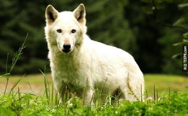 10. 居家狗 – 我超爱狗的,但是如果狗的主人不会教,导致狗儿学习暴力倾向的话,那他们就会开始攻击人类。每年因为这样,186个人因此丧命。
