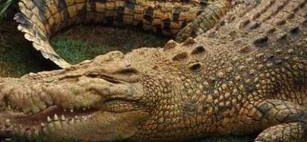 19種殺最多人類的動物。排行第一的殺人魔一定會嚇到你!