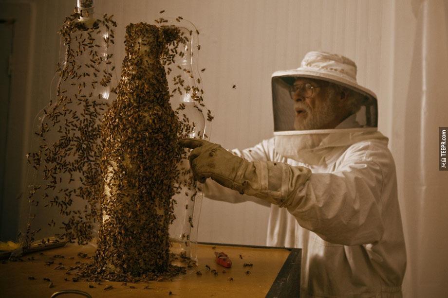 製作瓶狀蜂巢的過程。