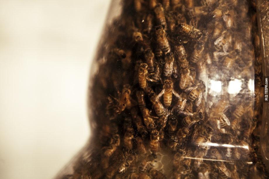 bees_nature_printer_03
