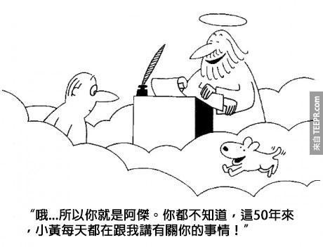 狗狗愛人類