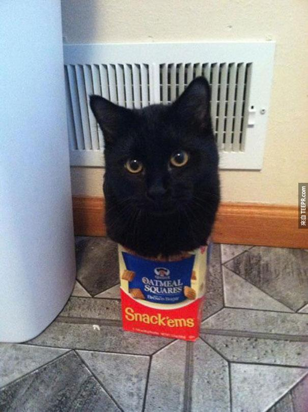 原來貓真的是水做的。連這樣也塞的進去...#16超誇張的!