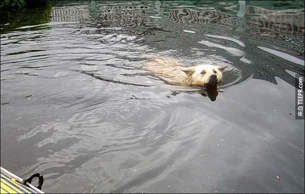 我們都知道狗很忠心,但是我對他接下來做的事情真的太佩服了。