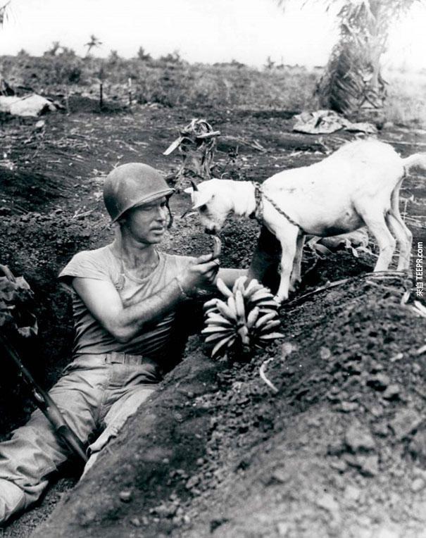 士兵跟一隻羊分享一根香蕉 - 1944 賽班島