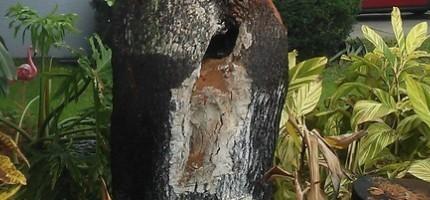 猜猜看這個人對這棵樹做了什麼事情?你看了之後一定會很崇拜他!