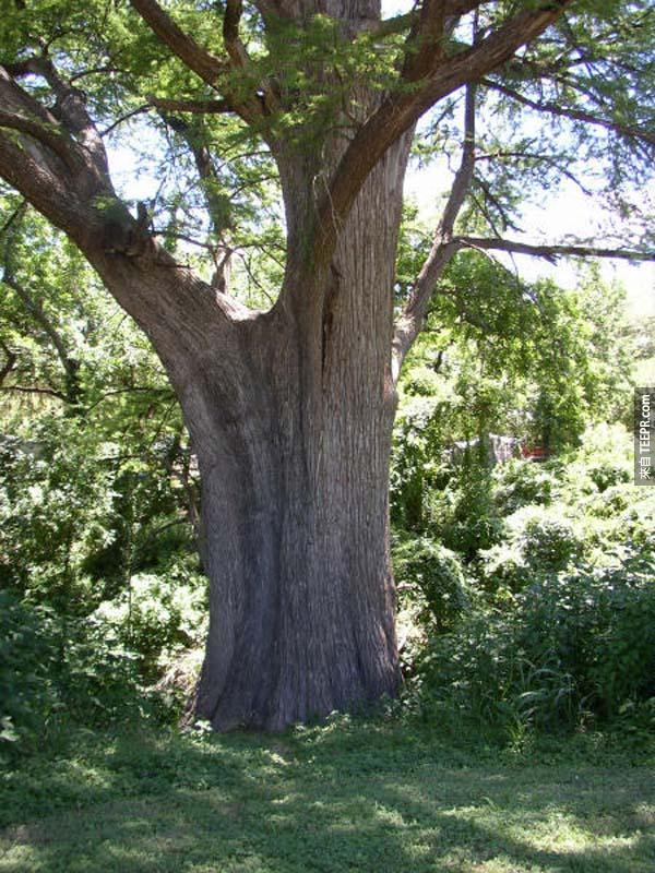 你一定要看這名男子對這塊木頭做的事情...一定會比你想像的還要精采10倍!