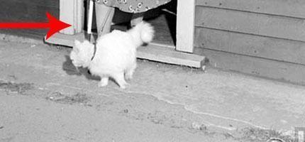 在1947年的時候,這名女士把她的貓拿來做一件超荒謬的事情。但是又超可愛的!