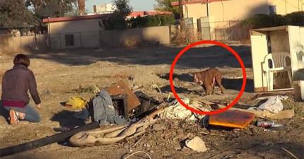 他們找到一隻脖子一圈很深傷痕的狗狗。看這故事如果身邊沒有衛生紙的話不要看!
