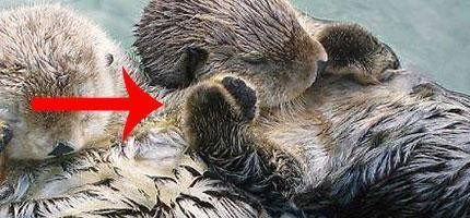 41個關於動物的超驚奇的小知識。包準你看完後心情馬上大好!