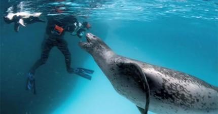 這名攝影師在海裡遇到的兇猛野獸不只沒有殺他,居然還照顧他!