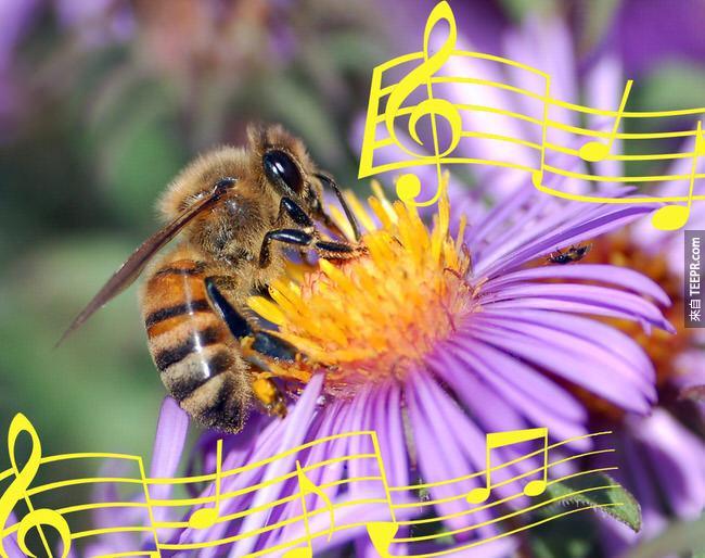 10. 蜜蜂用跳舞來溝通。