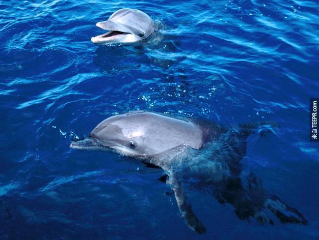 23. 海豚都會給對方取名字。