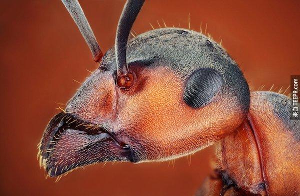 這完全改變了我對昆蟲的看法...我再也不忍心殺它們了!