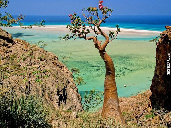 島上的3分之1的植物都是未見過的。