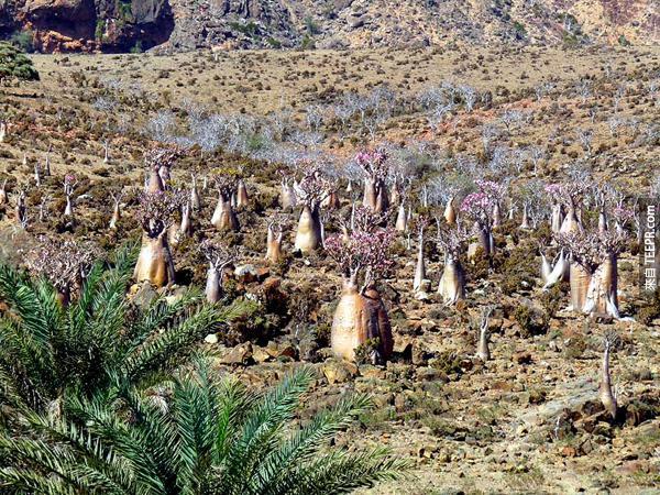 岛上的动物的生存受到近年来的天气变化,而且这岛上也渐渐越来越多新的动物种类。