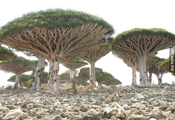 進化沒有收到干擾的植物真的很不可思議。
