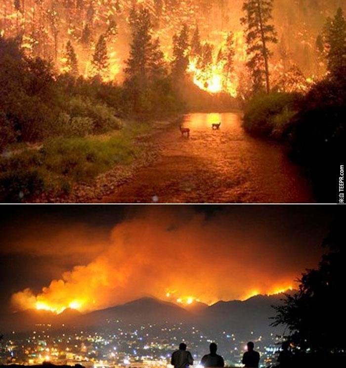 6)在加州的歷史上最大和最致命的野火,2009(美國)