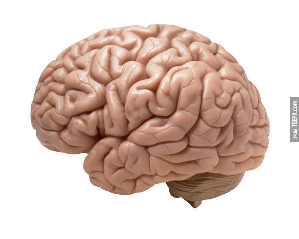 32.) 人類不只用到我們大腦的一成。其實我們都用到所有的大腦,只是我們用不同大腦的區域來做不同的事情。