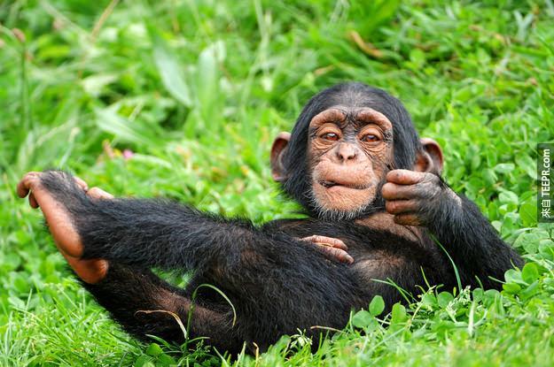 30. 黑猩猩幼兒會玩玩偶。
