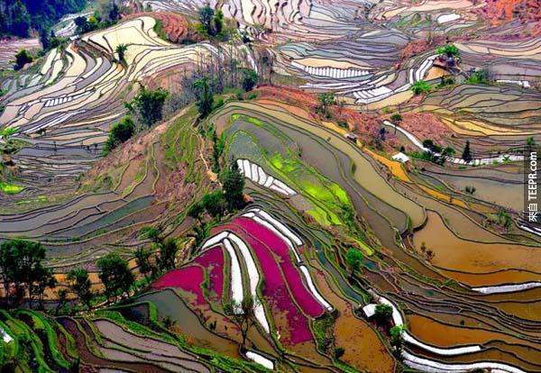 27)陽台稻田(中國)