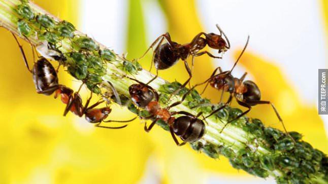 34. 螞蟻非常有禮貌,它們打招呼的時候還會敬禮呢。