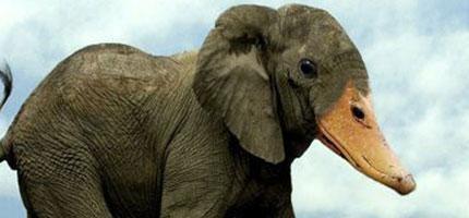 這30個動物混合體會讓你的腦袋爆掉!除了#6,太犯規了!超想要抱住他的!