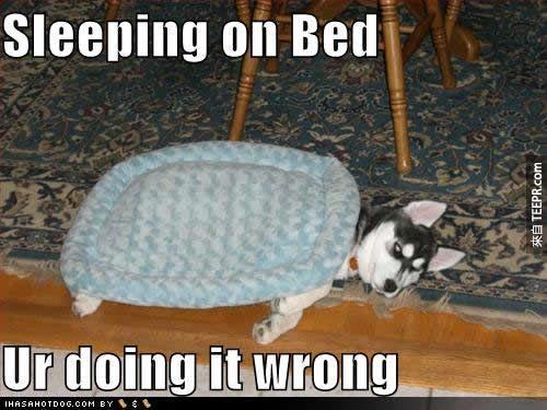 """28. """"謝謝你的新床,但是我睡在地毯上就好了。"""""""