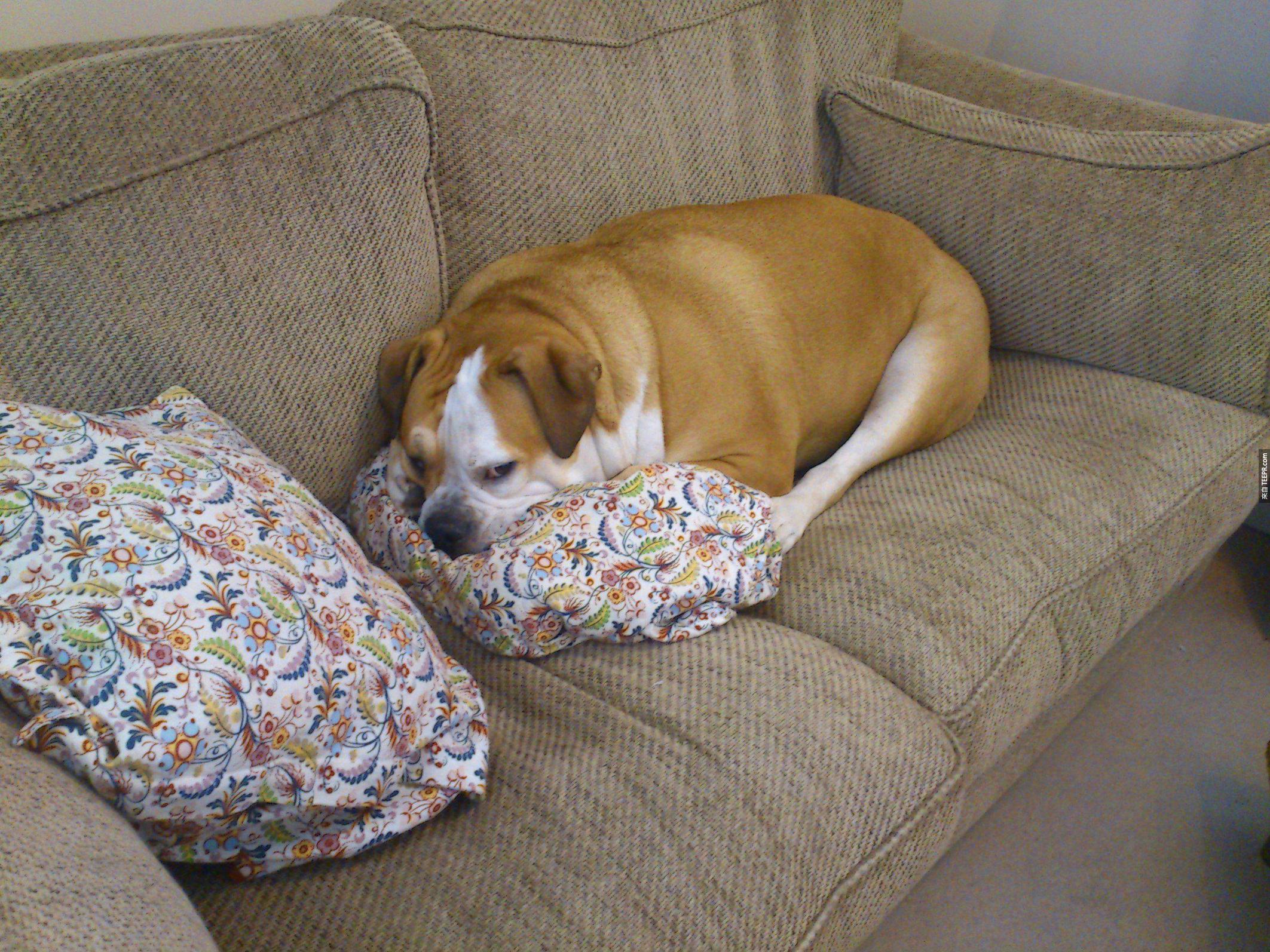 """15. """"這是我的枕頭...不是你的!"""""""