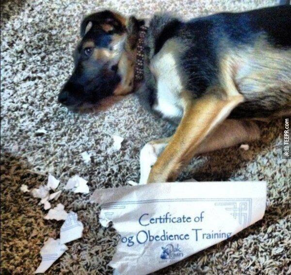 """21. (紙上寫著服從訓練證書) """"我跟你說過我是一個放蕩不羈的狗狗。"""""""