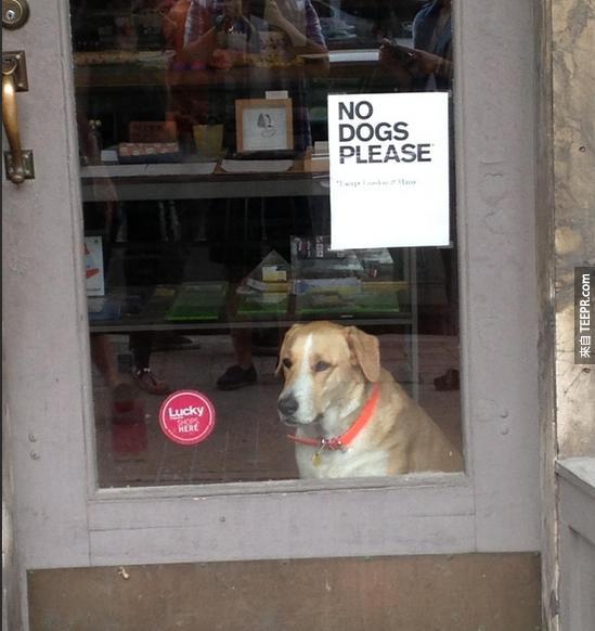 45件只有養狗的人才會知道的事。從#1就超好笑的!