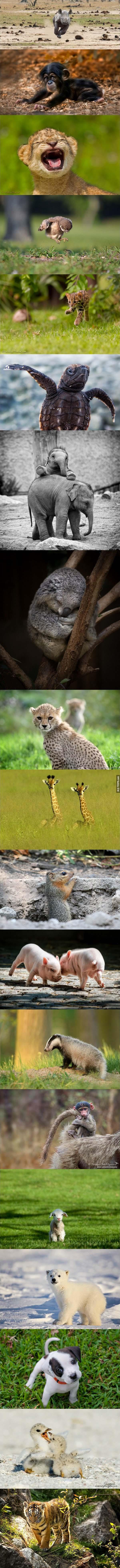 這名攝影師去戶外拍一種很特別的動物。拍出來的結果是這樣...