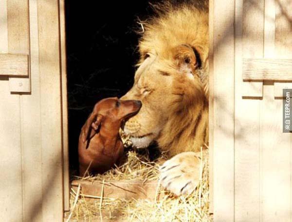 動物比人類好。這就是最好的證明!