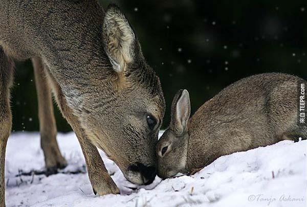 9.) 野鹿和兔子