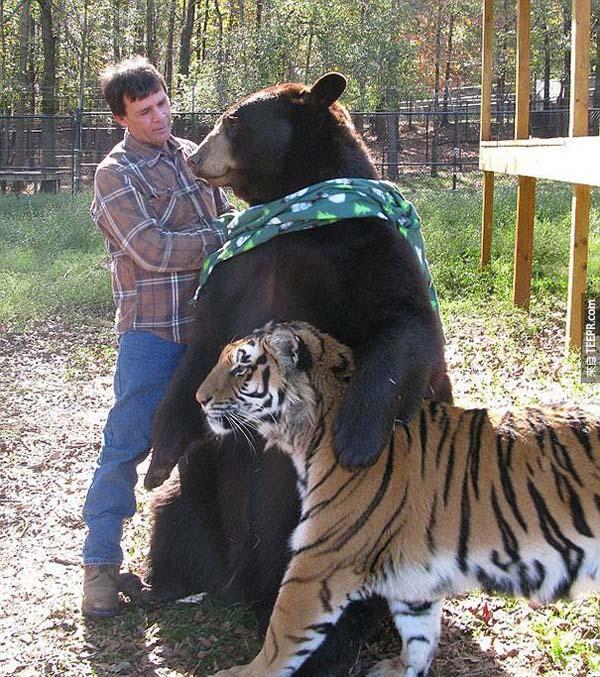 這3隻動物都原本是一名毒梟的,但是後來都被拯救了。