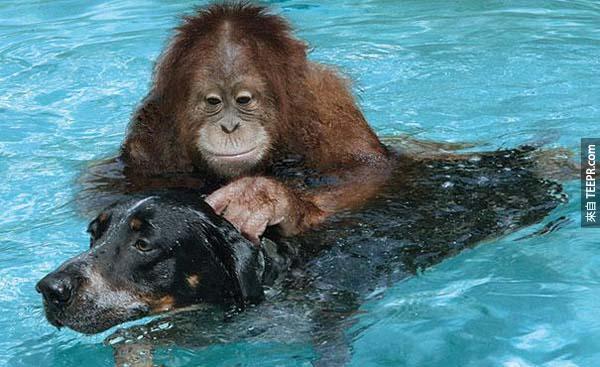 他們兩個一起住在美國的一個瀕臨絕種的保護園區。