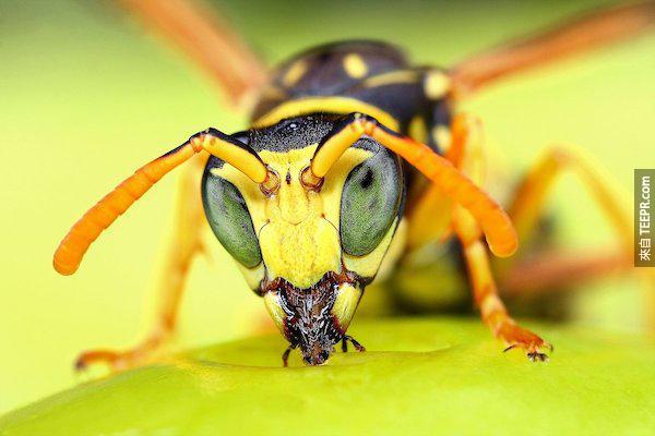 bug close ups22