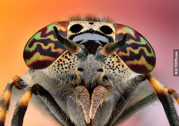 bug close ups23