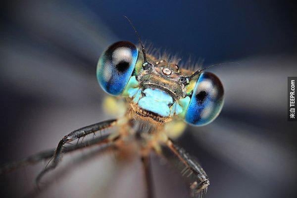 bug close ups24